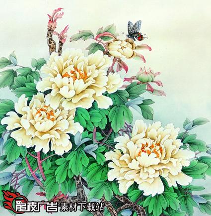 洛阳龙波广告 洛阳牡丹 图片 洛阳红 二乔 工笔画